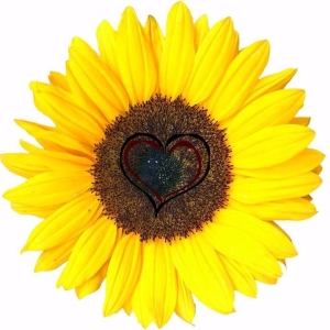 cropped-kindness-sunflower